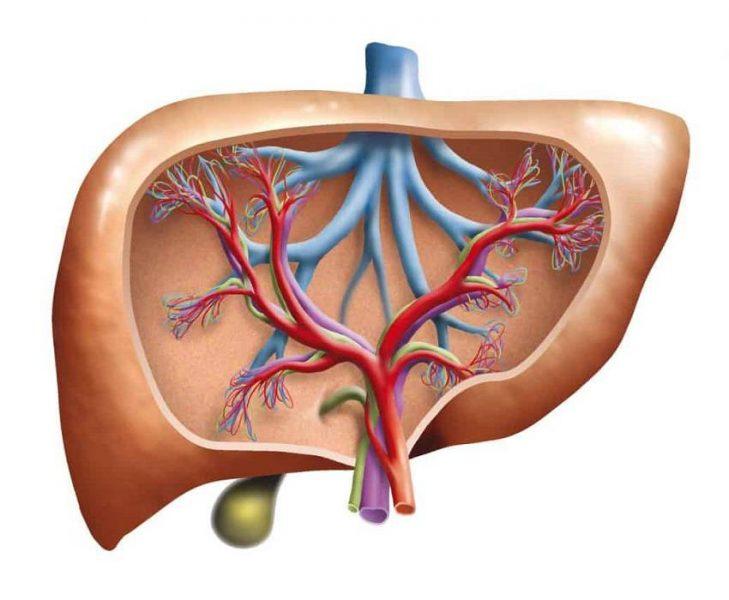 آنزیم های کبدی چیست
