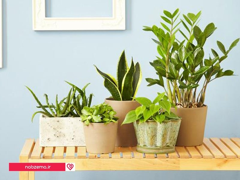 5-indoor-houseplants-you-cant-kill-2-size-3