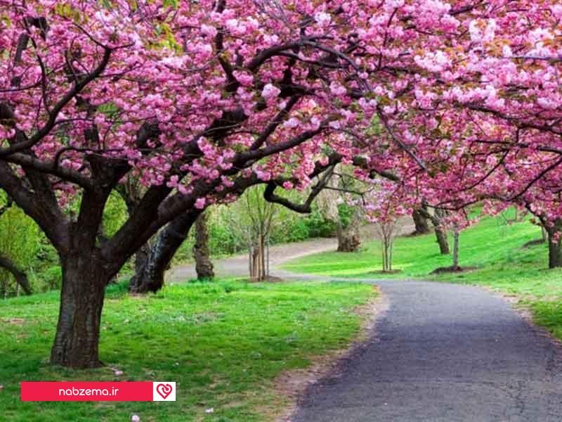 عکس بهار