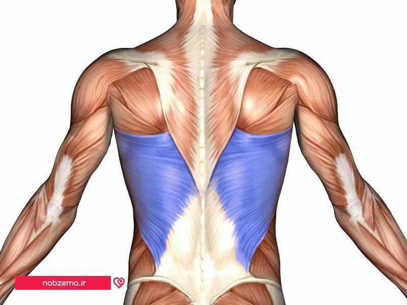 التهاب عضلات