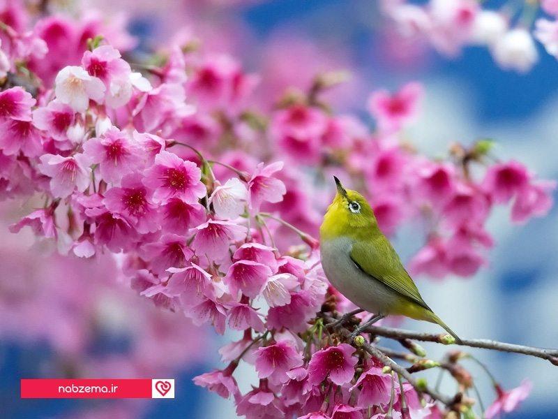 آمدن بهار