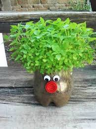 رشد دادن سبزه در قسمت پایین قوطی نوشابه