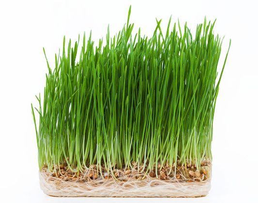 روش سبز کردن سبزه