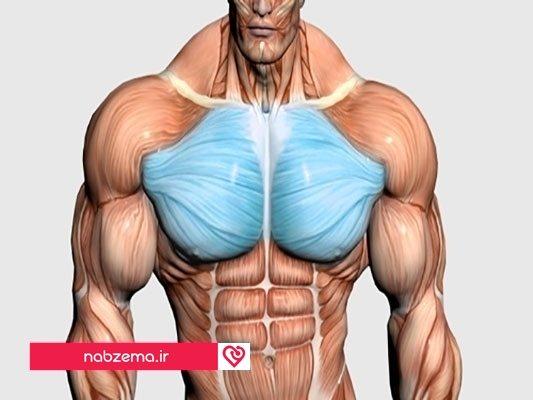 رشد سریع عضلات