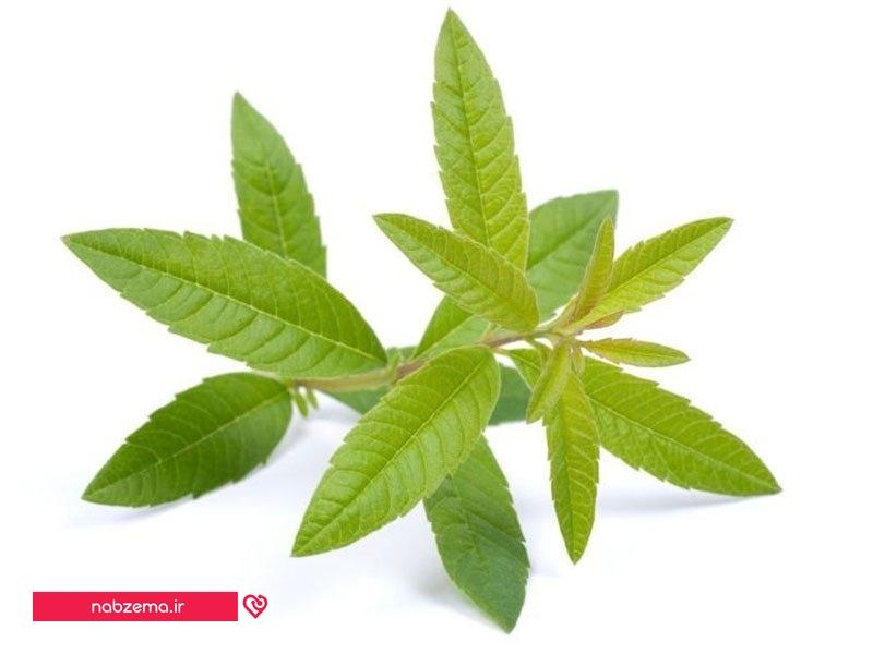 عکس خواص گیاه دارویی به لیمو