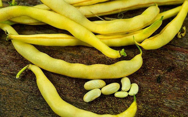 مضرات لوبیا زرد