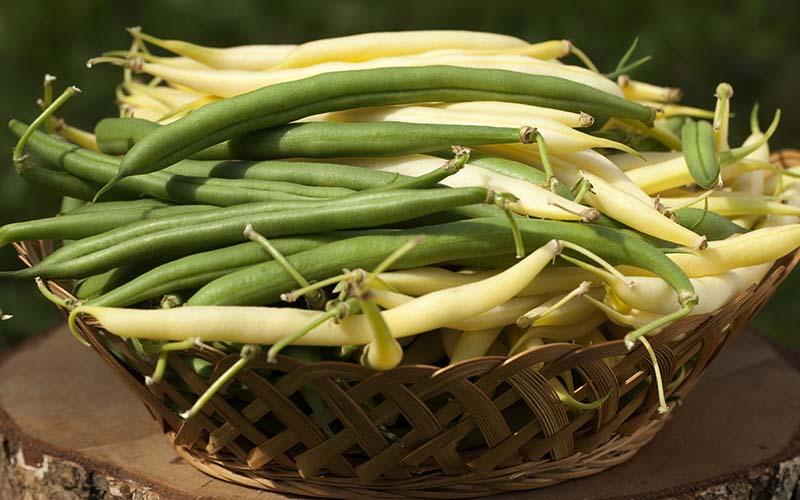 ارزش غذایی لوبیا زرد رنگ