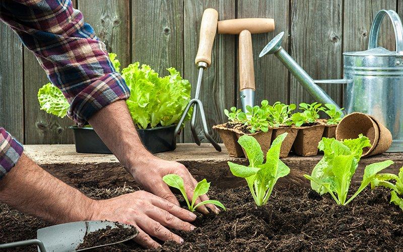 شغل باغبانی