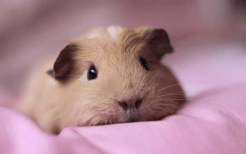 حیوانات خانگی کوچک