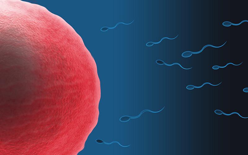 تولید اسپرم