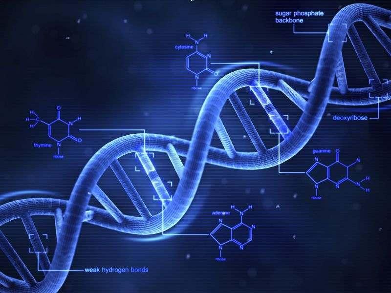نقش عوامل ژنتیکی در سرطان خون